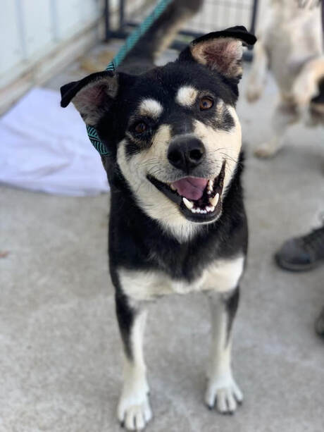 Adoptable Dogs in Sioux Falls